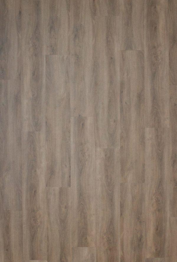 Gelasta arizona 8011