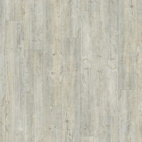 Moduleo Latin pine 24142
